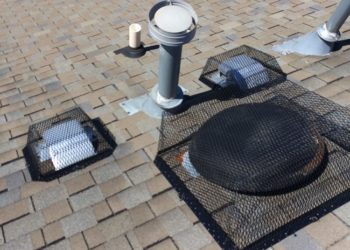 Roof vents protected Critter Control Triad